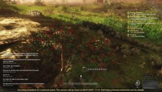 como conseguir arandanos en new world